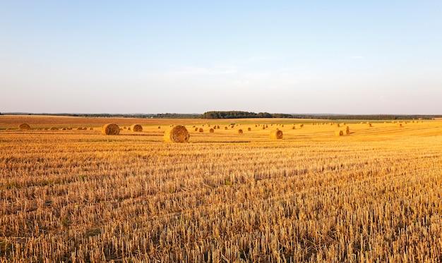 Pila di paglia - la pila di paglia fotografata durante la compagnia di raccolta dei cereali