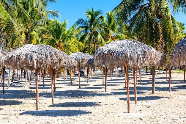 Ombrelloni di paglia sulla spiaggia sabbiosa con palme a varadero, cuba.