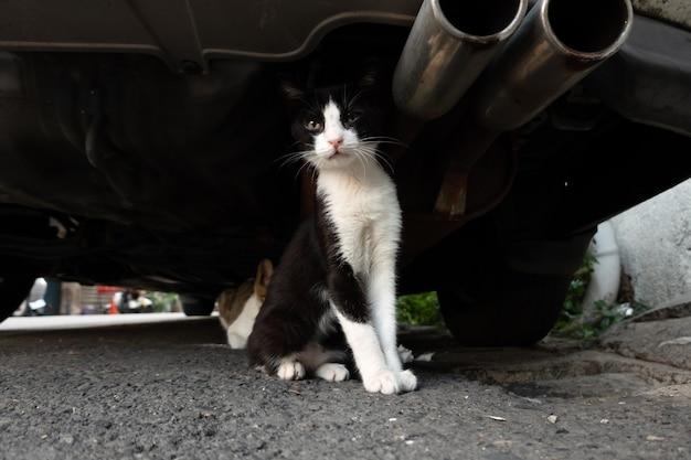 Gatto randagio bianco e nero si nasconde sotto un'auto con suo fratello in città