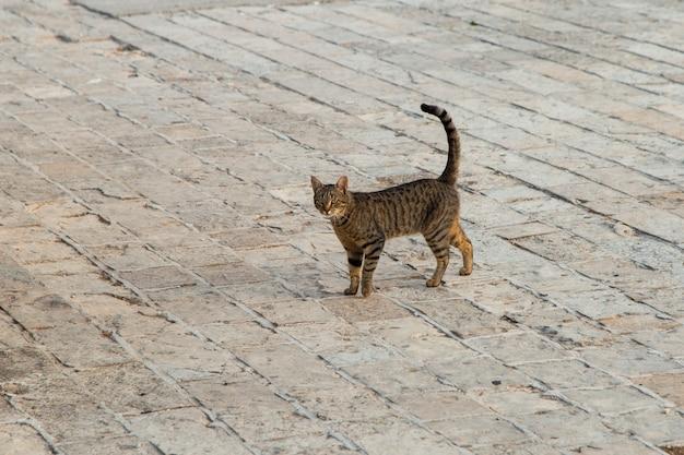 Un gatto randagio fa i suoi affari per strada.