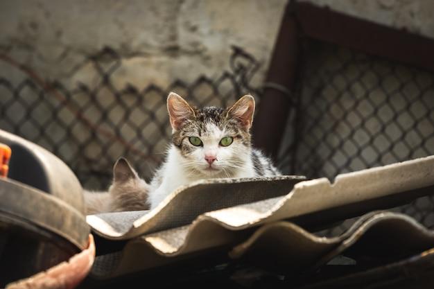 Mamma gatto randagio con gattino in una discarica sporca