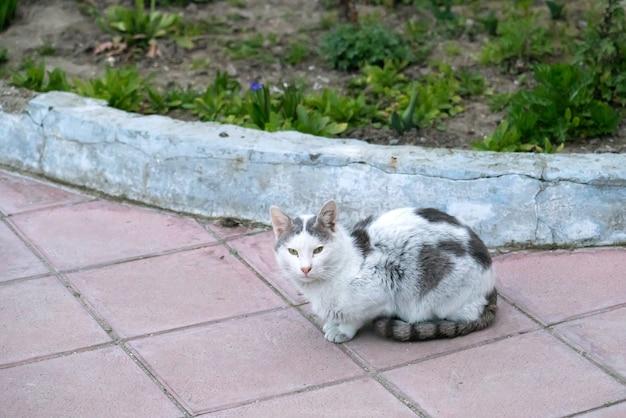 Gatto randagio nel patio
