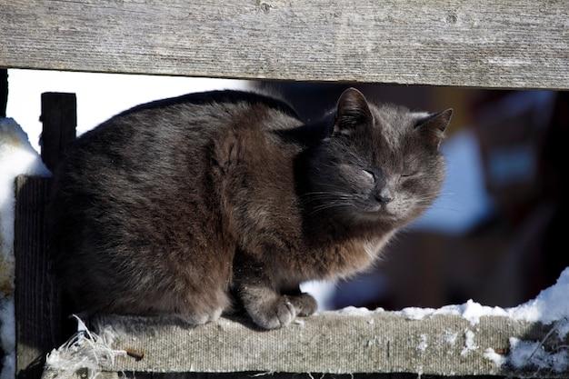 Un gatto randagio si siede su un recinto. animali di strada. foto di alta qualità
