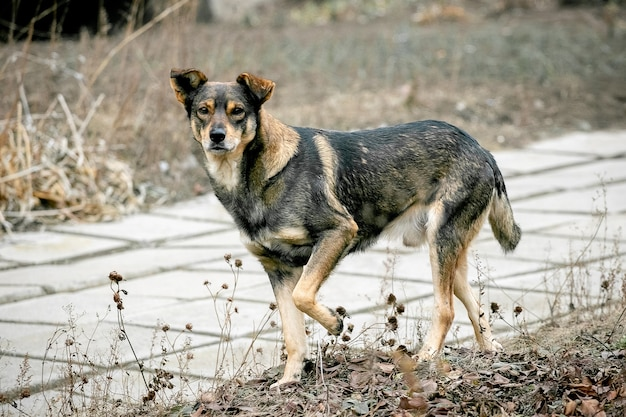 Un cane randagio in un vicolo del parco cittadino