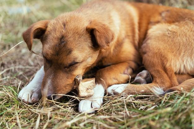 Un cane randagio rosicchia un osso per strada