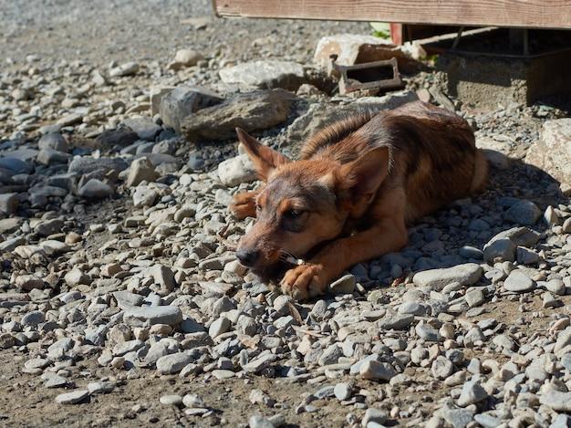 Un cane randagio sdraiato su una superficie rocciosa