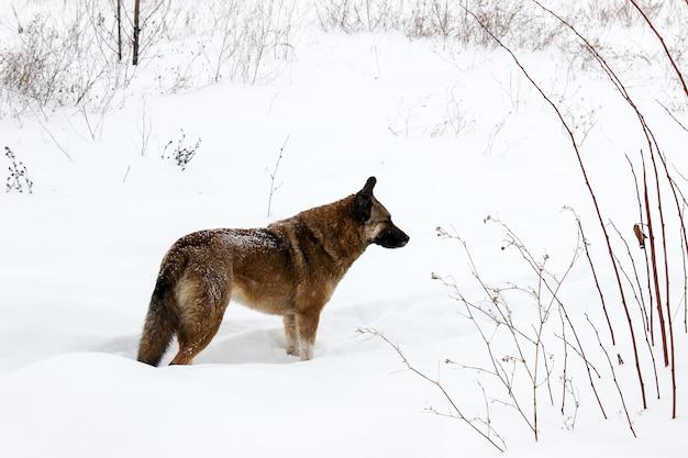 Un cane randagio nella neve