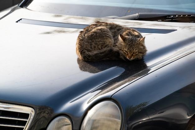Gatto randagio senzatetto che riposa sul cofano di un'auto