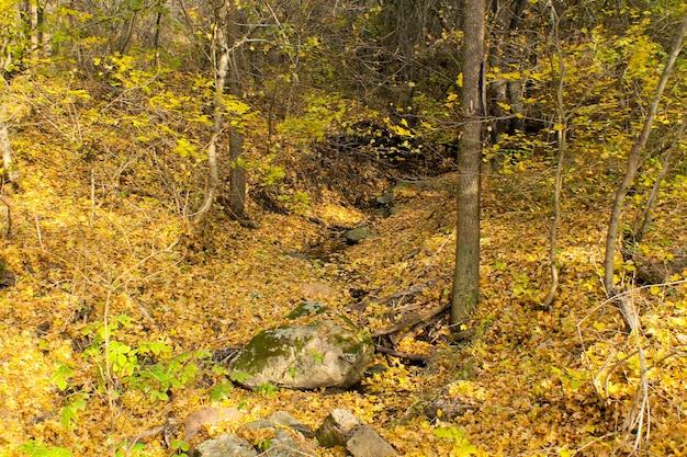 Flusso nella foresta d'autunno