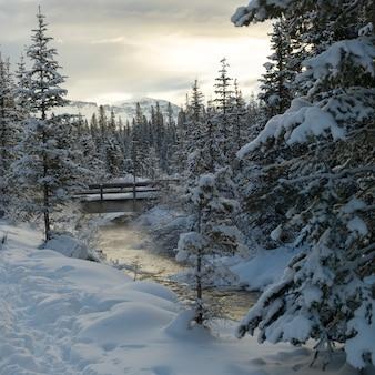 Flusso che scorre nella foresta nevosa, lake louise, parco nazionale di banff, alberta, canada