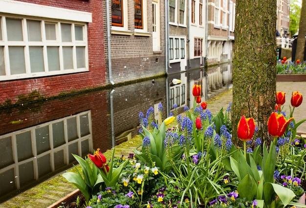 Strada di delft in primavera, olanda