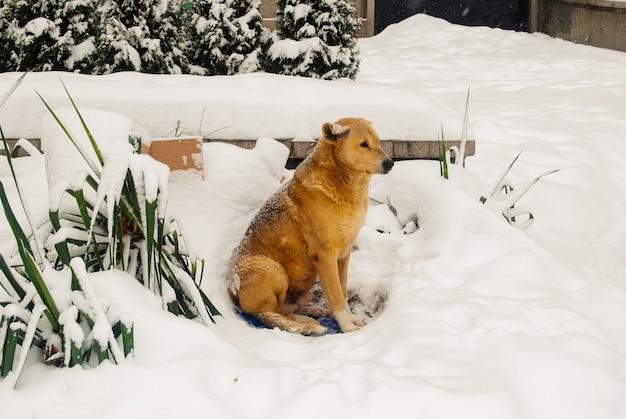 Un cane di strada da solo nella neve.