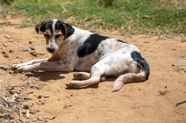 Un cane di strada sull'isola del madagascar