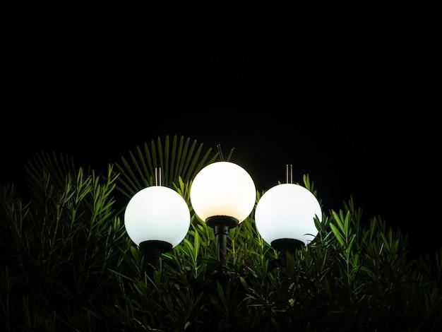 Un lampione brilla di notte su una palma