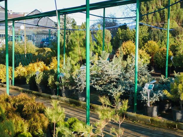 Negozio di strada che vende alberi freschi. foto di alta qualità