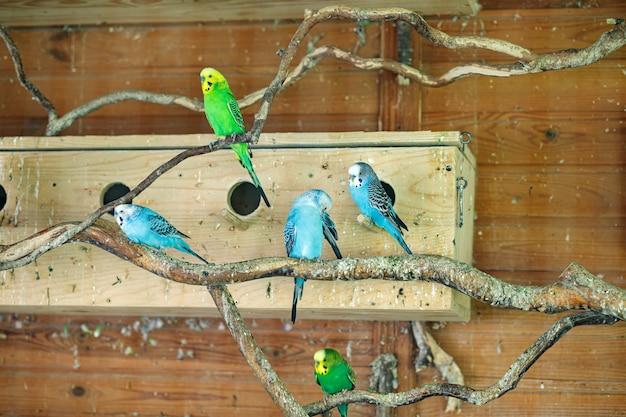 I pappagalli a strisce si siedono su un ramo vicino ai nidi