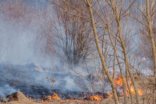 Un forte incendio si diffonde a raffiche di vento attraverso l'erba secca, l'erba secca fumante, il concetto di fuoco e l'incendio della foresta.