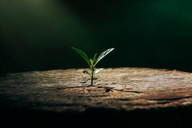 Una forte piantina che cresce nel vecchio albero morto al centro, concetto di supporto per costruire un futuro focus su una nuova vita con germogli