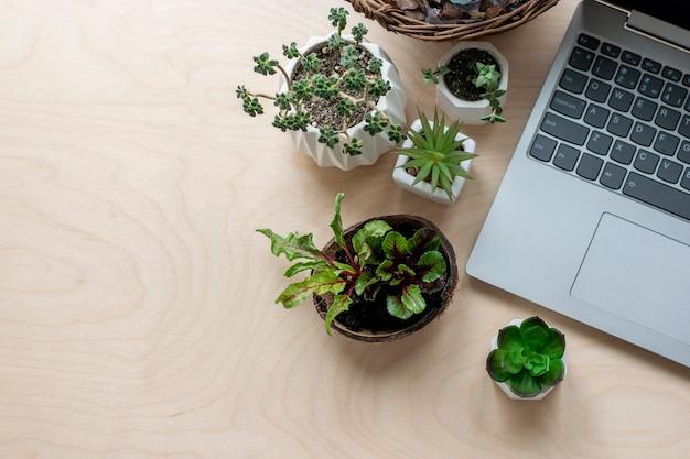 Studio di giardinaggio, piante. corsi di formazione online in giardinaggio.