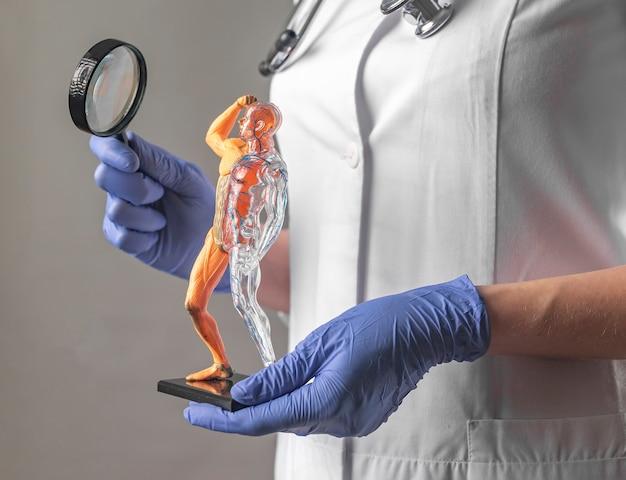 Studio del concetto anatomico dei sistemi circolatori e muscolari modello di corpo umano sano in medico o tè...