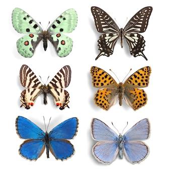 Insetti ripieni set collezione farfalle