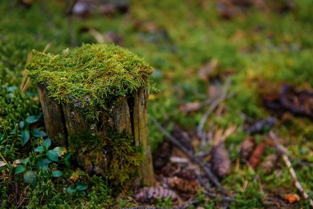 Ceppo ricoperto di muschio verde bagnato in una fitta foresta, primo piano, soft focus
