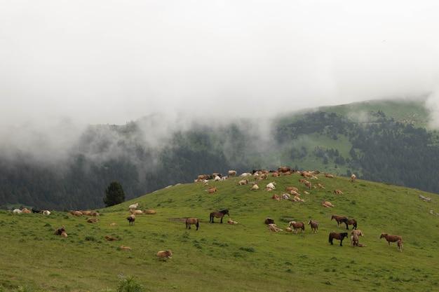 Splendido prato alpino dei pirenei con mucche e cavalli al pascolo