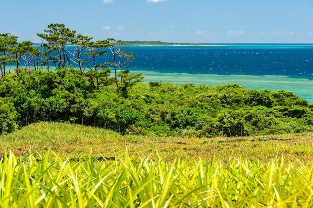 Splendida isola di vegetazione verde mare sfumato blu sullo sfondo