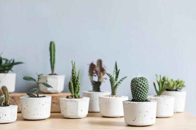 La composizione elegante e botanica del giardino interno di casa ha riempito molte piante in vasi di cemento di design diverso sul tavolo