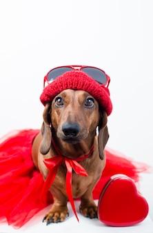 Cane alla moda in vestito rosso alla moda con cuore