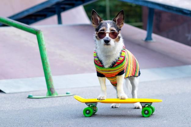 Elegante cane sulla rampa, in sella a un penny board all'esterno. un animale domestico sta cavalcando uno skateboard o un longboard nel parco giochi