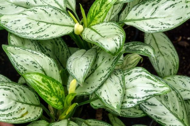 Pianta subtropicale foglie in serra botanica