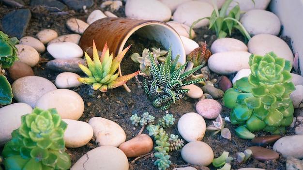 Decorazione da giardino con minuscole piante di fiori succulenti con tazza in ceramica rotta