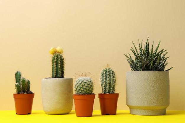 Piante succulente in vasi sulla tavola gialla, spazio per testo