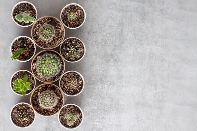 Piante succulente in piccoli bicchieri di carta su uno sfondo di cemento con spazio per le copie