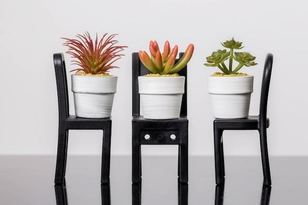 Le piante grasse su una sedia si trovano su una superficie di vetro nero su un muro bianco