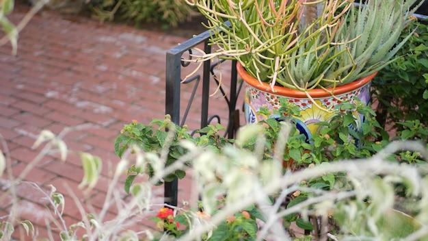 Piante grasse in vaso da fiori, giardinaggio in california usa. piante della serra in vasi di argilla colorati. design del giardino in stile messicano, floricoltura decorativa del deserto arido. vegetazione botanica ornamentale naturale