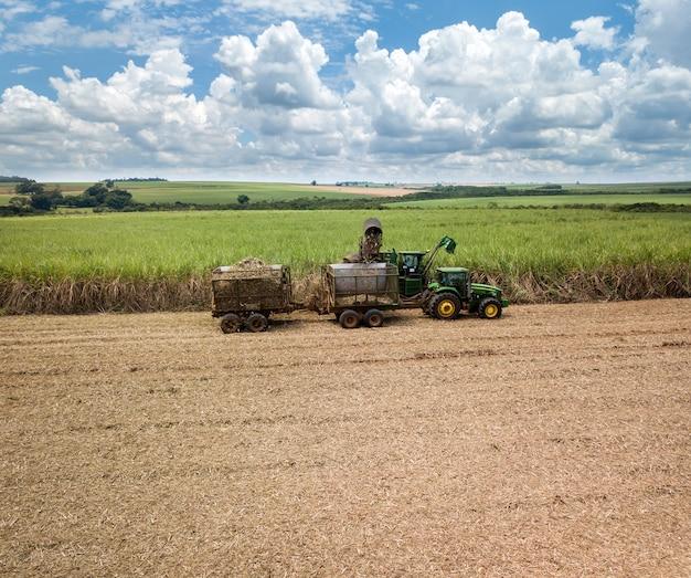 Canna da zucchero - macchina per la raccolta che lavora su una piantagione di campo di canna da zucchero sulla superficie del cielo colorato.