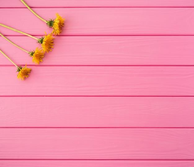 Estate sfondo astratto angoli fiori bordi cornici denti di leone gialli