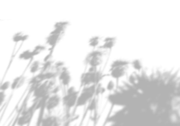 Sfondo estivo dall'ombra di un rametto di erba di campo su un muro bianco per foto o mockup