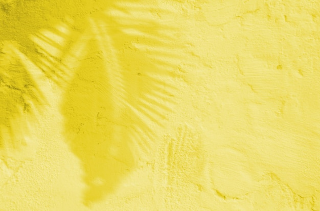 Estate sfondo di ombre ramo foglie su un muro. illuminante colore pantone dell'anno 2021.