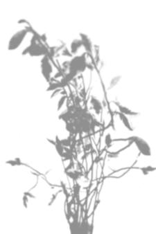 Sfondo estivo di ombre di rami di salice su un muro bianco. bianco e nero per sovrapporre una foto o un mockup.