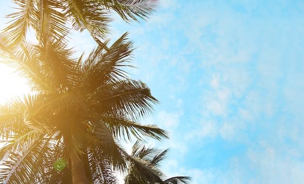 Sfondo estivo con albero di noce di cocco e cielo sereno
