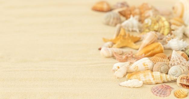 Sfondo estivo con conchiglie sulla sabbia
