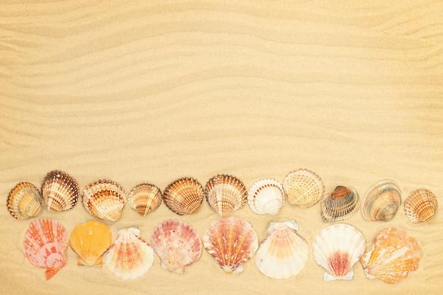 Sfondo estivo con conchiglie sulla spiaggia sabbiosa