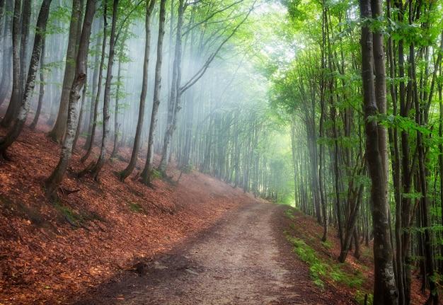 Foresta di faggi estivi sulle pendici delle montagne