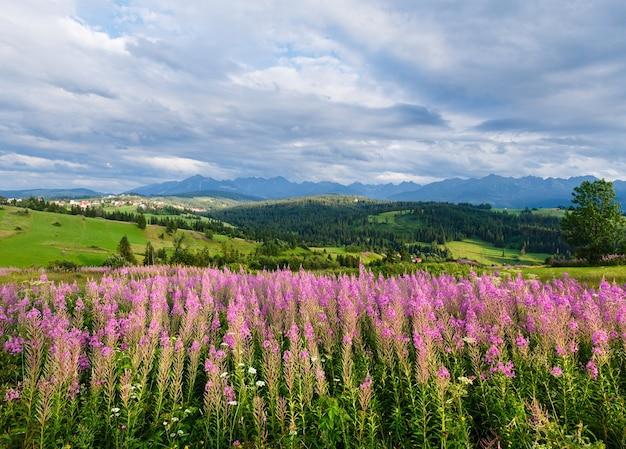 Serata estiva alla periferia del villaggio di montagna con fiori rosa davanti e la catena dei tatra dietro