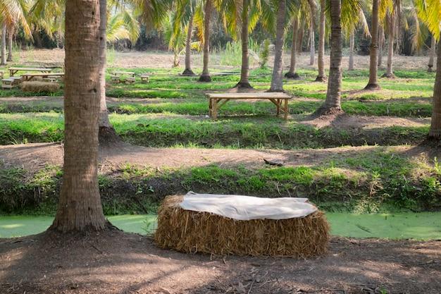 Campo estivo di palme da cocco Foto Premium