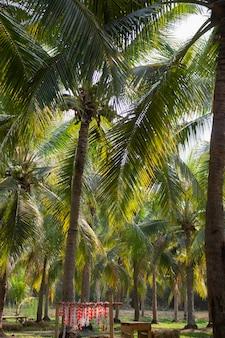 Campo estivo di palme da cocco