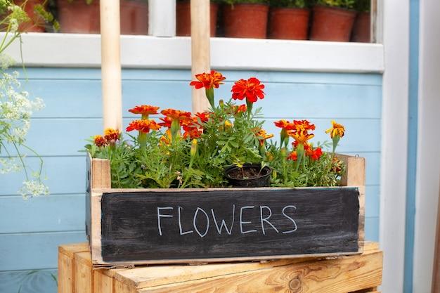 Fiori estivi nella scatola di legno in strada vicino al negozio di fiori che sbocciano fiori tagetes arancioni in vaso su verande